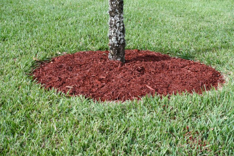 Correct Way To Mulch Around Tree Base