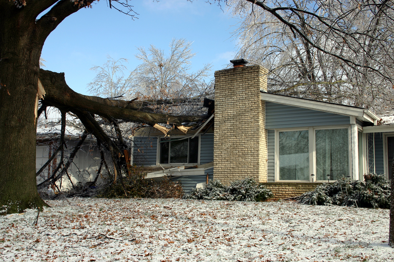 Prevent Storm Damage to Trees