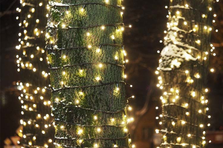 How To Install Christmas Lights On An Outdoor Tree