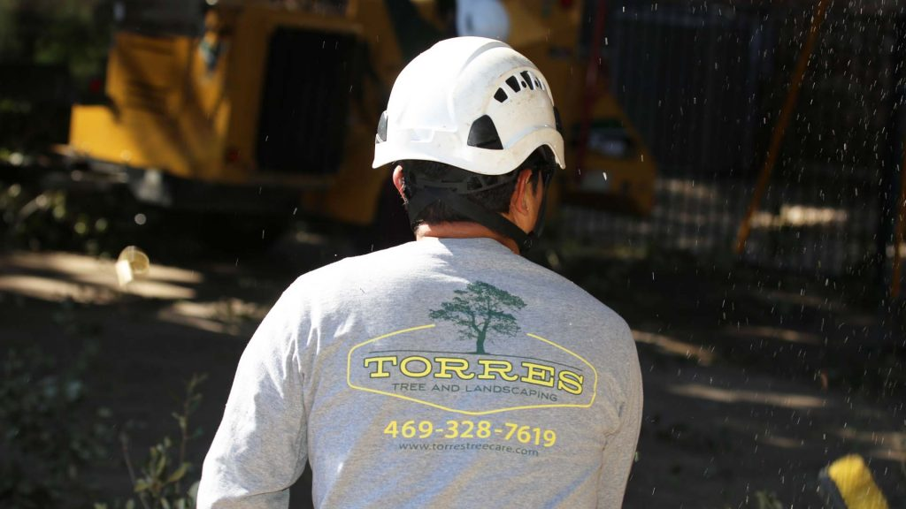 torres-tree-services-llc-dallas-fort-worth-crew