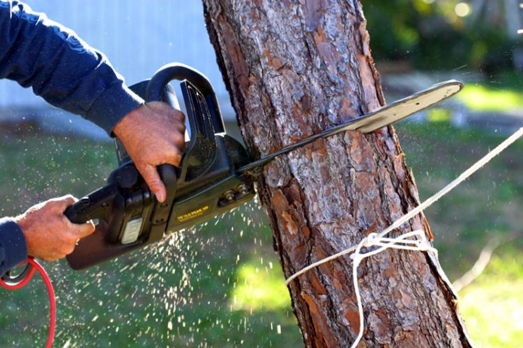 How to Deal with a Dead Tree at Home