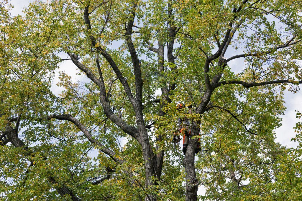 torres-tree-services-llc-dallas-fort-worth-crew