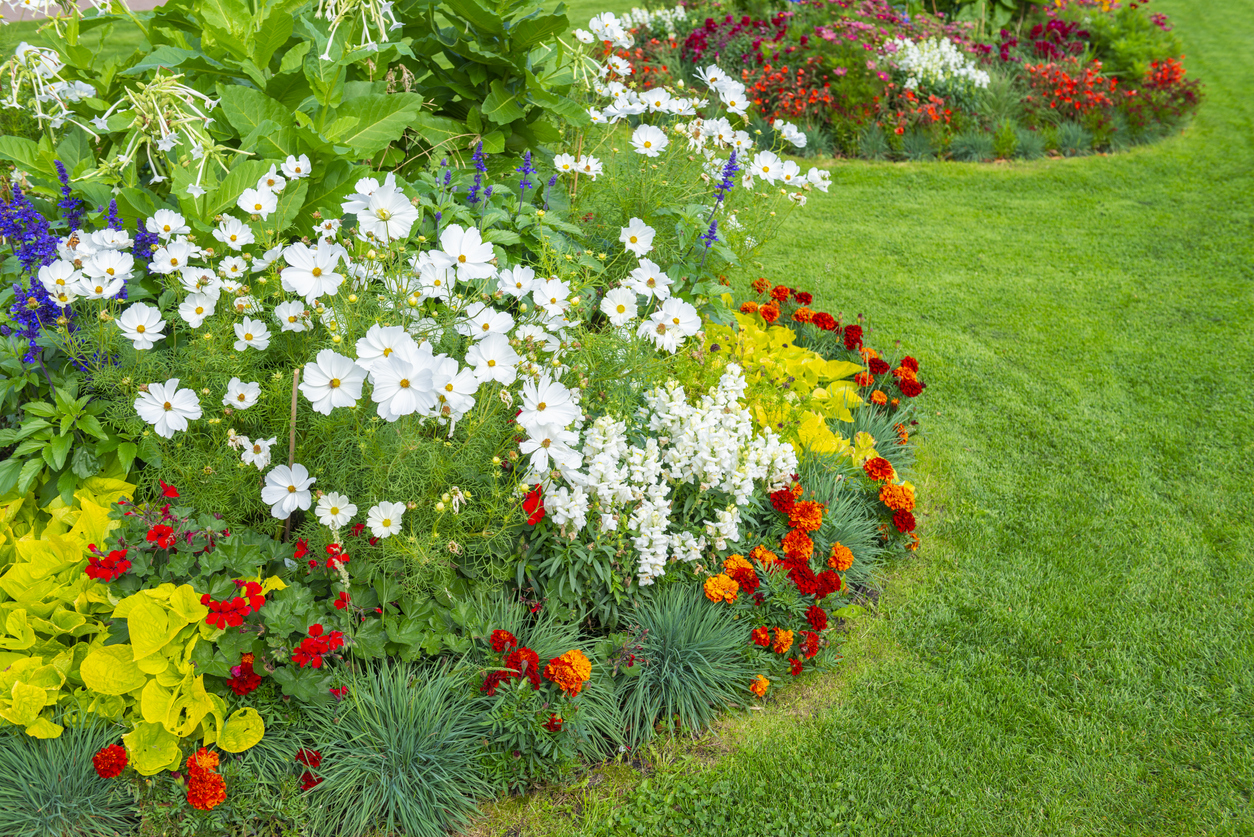 A variation of flowers in a beautiful flowerbed on a lawn.
