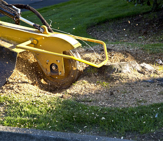 stump grinding services irving