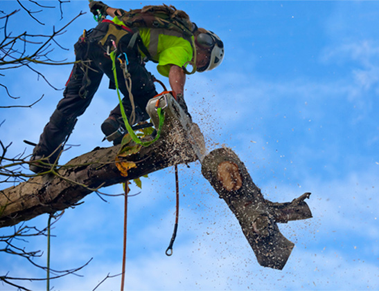 tree removal irving